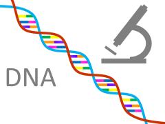 Как проводится тест ДНК на отцовство: важные детали