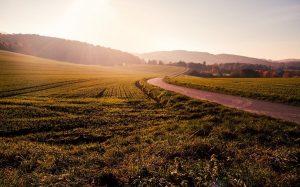 Оформление земельного участка в наследство