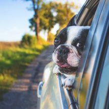 Страхование жизни при автокредите: обязательно или нет